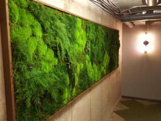 Artisan Moss Washington DC apartment plant wall interior.