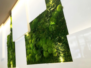 Artisan Moss urgent care reception green wall hangings.