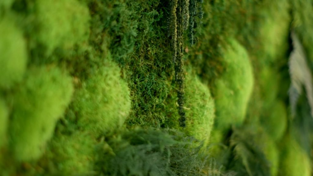 Artisan Moss short video of green wall plant art by Green Sky Studio