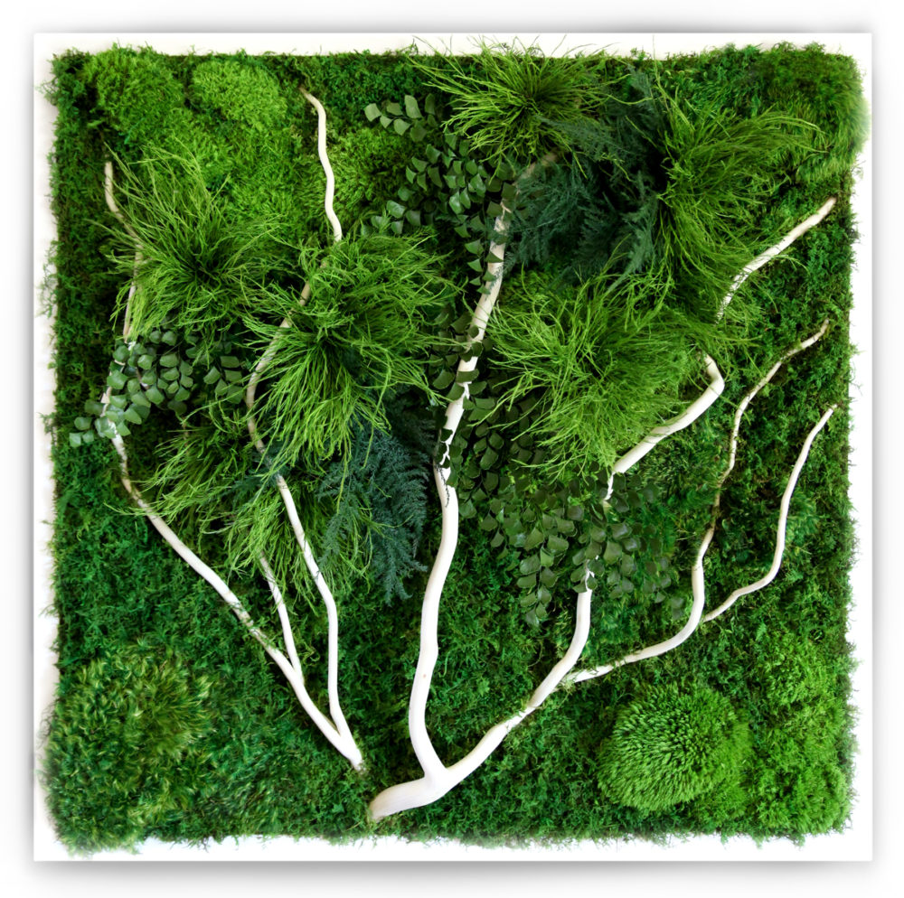 Green Wall Art moss wall art retail and residential gallery - artisan moss